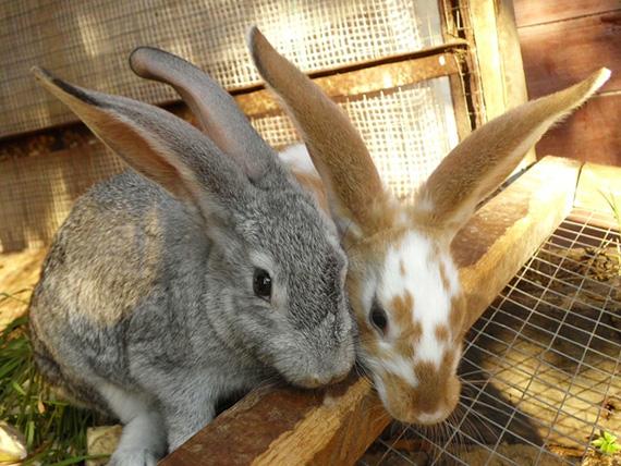 Кролики продвижение сайтов скачать demo xrumer